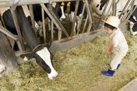 牛舎の牛に干し草を与える男の子
