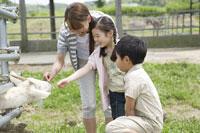 ヤギにエサを与える親子