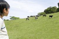 放牧場の牛を眺める男の子