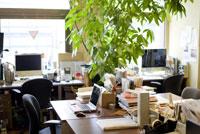 緑のあるオフィス