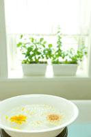 洗面器に浮かべたガーベラと窓辺のミント
