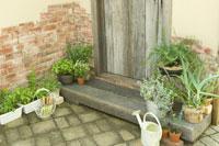玄関脇で育てているローズマリーやアロエやミント