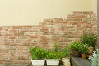 スイートマジョラムやジャパニーズミントのハーブ鉢植え