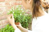 千日紅の鉢植えを手に持つ女性