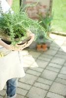 自家菜園のローズマリーを抱える女性の手元