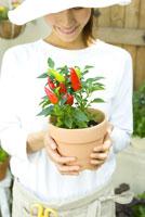 トウガラシの鉢植えを手に持った女性