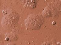肝細胞 28191000004| 写真素材・ストックフォト・画像・イラスト素材|アマナイメージズ