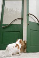 ドアの向こうを覗く犬