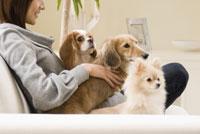 ソファでくつろぐ犬と女性