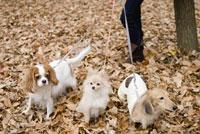 落ち葉の上の犬