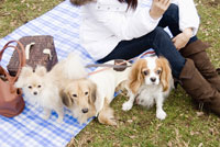 3匹の犬と女性