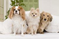 ソファに座る犬達