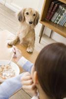 食事中の女性をのぞきこむ犬