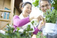 植物の手入れをするシニア夫婦
