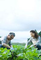畑仕事をするシニア夫婦