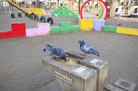 恵比寿公園の水飲み場とハト