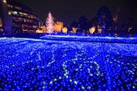 六本木のクリスマスイルミネーション 29000000988| 写真素材・ストックフォト・画像・イラスト素材|アマナイメージズ