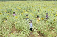 ひまわり畑と子ども達