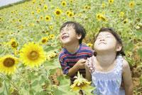 ひまわり畑と子ども達 29959000080| 写真素材・ストックフォト・画像・イラスト素材|アマナイメージズ