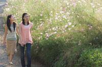 コスモス畑の傍らを歩く2人の20代日本人女性