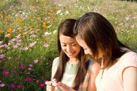 コスモス畑でカメラを確認する2人の20代日本人女性