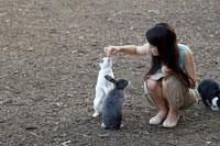 ウサギに餌付けする20代日本人女性