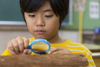 クワガタを観察している男の子 33000004260| 写真素材・ストックフォト・画像・イラスト素材|アマナイメージズ