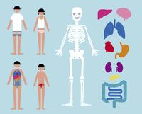 内臓・骨格・男女 60000000231| 写真素材・ストックフォト・画像・イラスト素材|アマナイメージズ