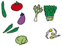 体を冷やす野菜