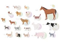 身近な動物 60003000050| 写真素材・ストックフォト・画像・イラスト素材|アマナイメージズ