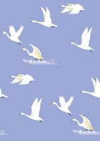 白鳥 60007000272| 写真素材・ストックフォト・画像・イラスト素材|アマナイメージズ