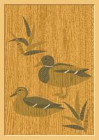 鴨 60007000481| 写真素材・ストックフォト・画像・イラスト素材|アマナイメージズ
