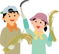 農業就労した若者が米を生産 60008000471| 写真素材・ストックフォト・画像・イラスト素材|アマナイメージズ