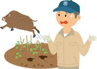 野生鳥獣による農作物被害 60008000478| 写真素材・ストックフォト・画像・イラスト素材|アマナイメージズ