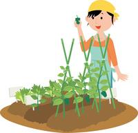 家庭菜園で野菜を作る若い女性 60008000519| 写真素材・ストックフォト・画像・イラスト素材|アマナイメージズ