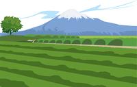 静岡の富士山と茶畑