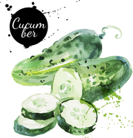 Green cucumber. Hand drawn watercolor painting on white background. Vector illustration