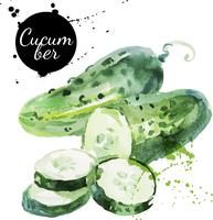 Green cucumber. Hand drawn watercolor painting on white background. Vector illustration 60016001447| 写真素材・ストックフォト・画像・イラスト素材|アマナイメージズ