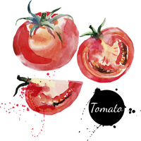 Tomato set. Hand drawn watercolor painting on white background. Vector illustration