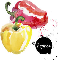 Red and yellow peppers. Hand drawn watercolor painting on white background. Vector illustration
