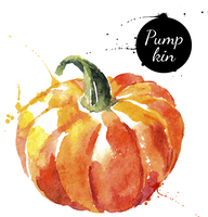 Pumpkin. Hand drawn watercolor painting on white background. Vector illustration 60016001470| 写真素材・ストックフォト・画像・イラスト素材|アマナイメージズ