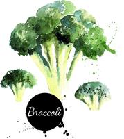 Broccoli. Hand drawn watercolor painting on white background. Vector illustration 60016001473| 写真素材・ストックフォト・画像・イラスト素材|アマナイメージズ