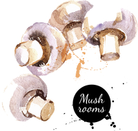 Mushrooms. Hand drawn watercolor painting on white background. Vector illustration