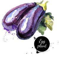 Eggplants. Hand drawn watercolor painting on white background. Vector illustration