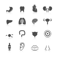 Human organs black icons set of kidney heart tooth liver lung isolated vector illustration