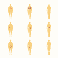 Human male silhouette figures with internal organs icons set isolated vector illustration