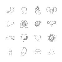 Human organs outline icons set of liver lips ear isolated vector illustration