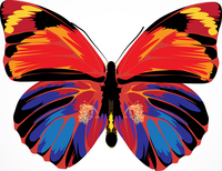 Vector illustration - Beautiful Brightly multicolored Butterfly