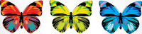 Vector illustration - Set of  Beautiful Brightly multicolored butterflies