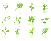 Vector illustration of green ecology nature floral icon set with reflections 60016007934| 写真素材・ストックフォト・画像・イラスト素材|アマナイメージズ